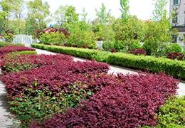 住宅小区绿化项目